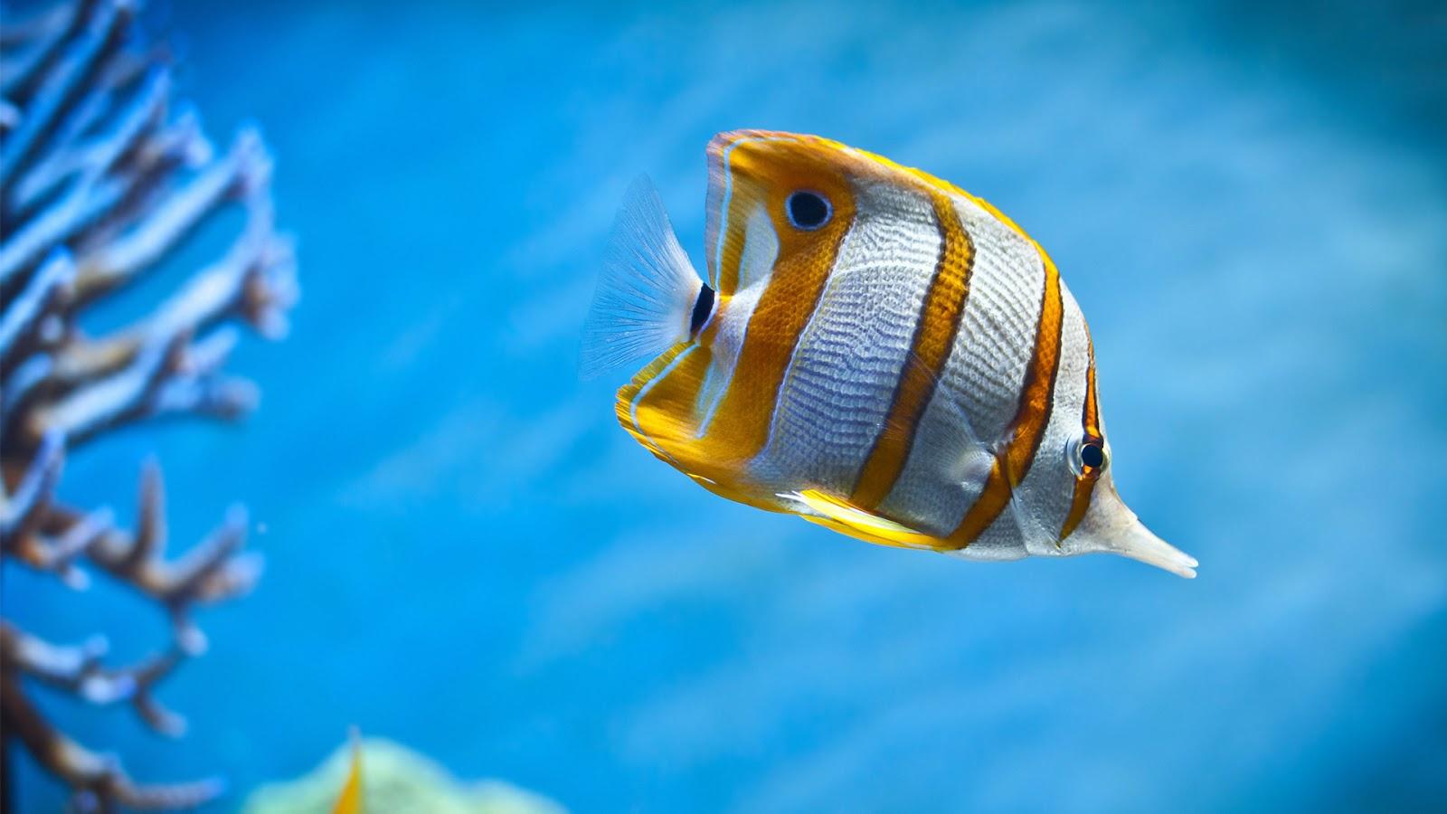 Beautiful Sea Fish | HD Wallpapers (High Definition ...