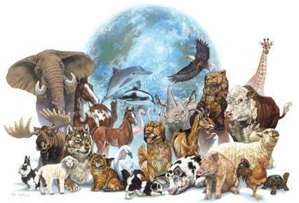 Imagen de animales