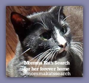 Help Courageous Momma Kat