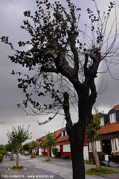 svart, svartnat, träd, black, tree