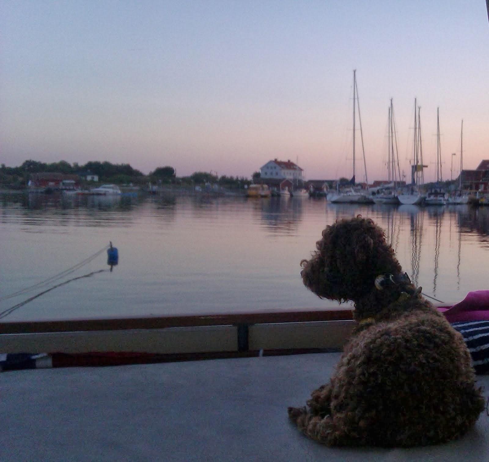 Bira i båten