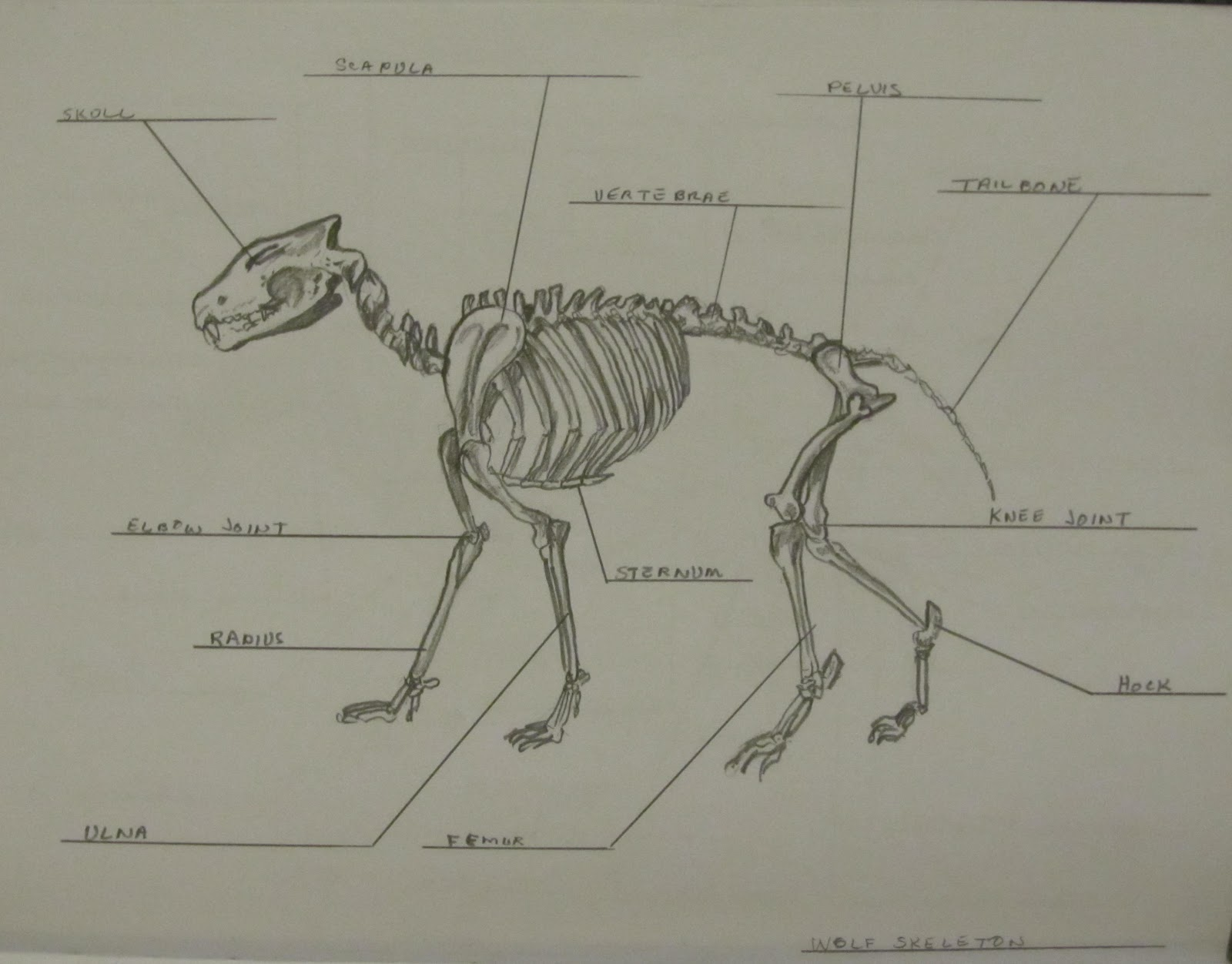 Art School Confidential: Summer Quarter 2012: Drawing and Anatomy ...