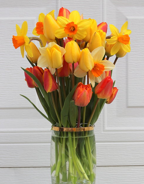 DAFFODIL AND TULIPS GO TOGETHER IN ARRANGEMENTS Sowing
