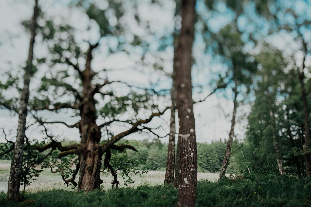 Eken innan vigselakten