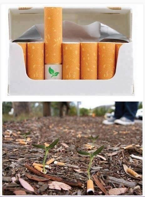 Designer Ben Norman cria cigarro biodegradável com semente de flor dentro.