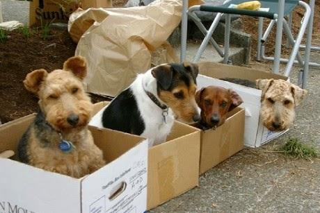 Robo de perros en Algeciras
