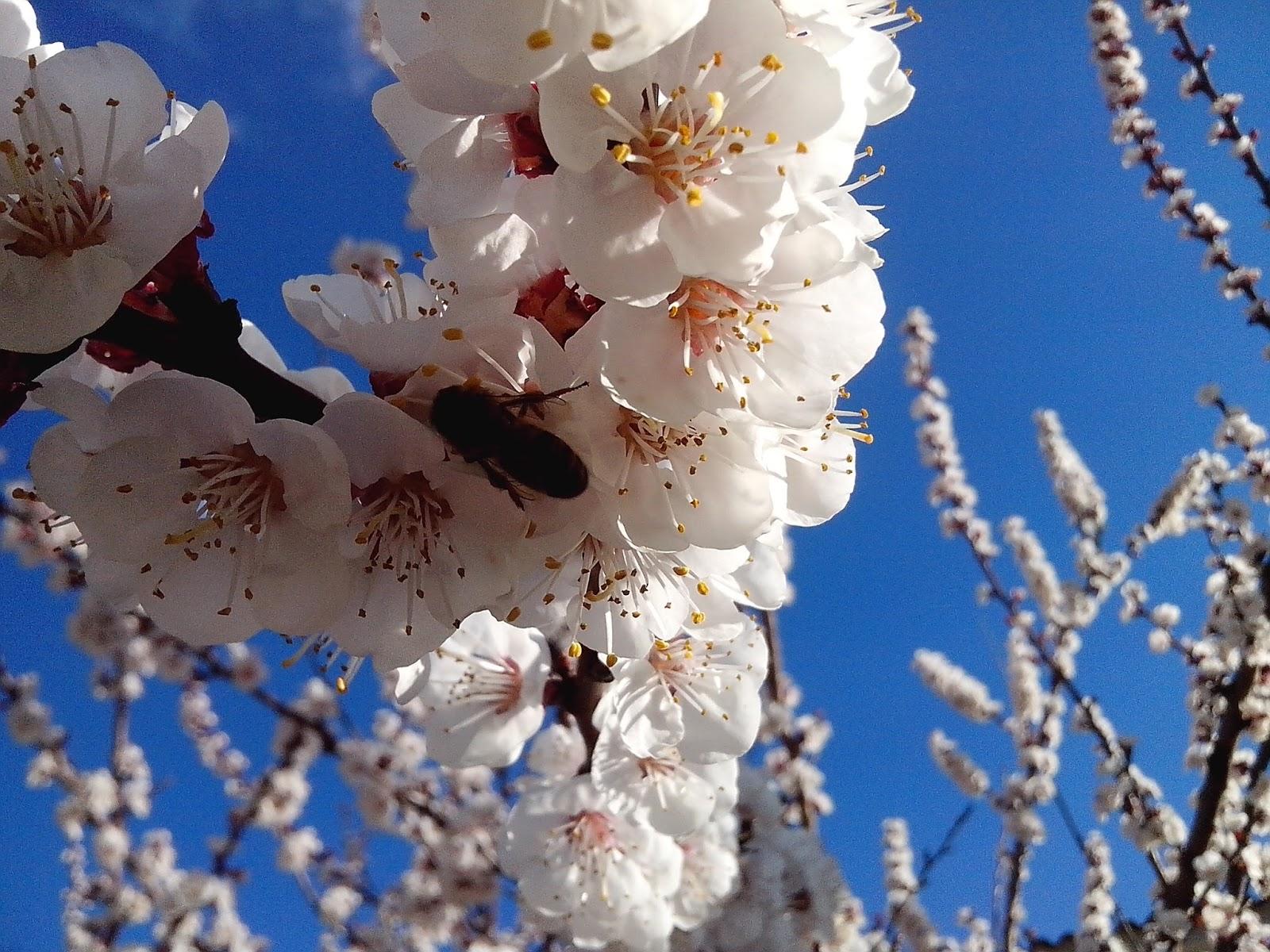 Bienvenida Primavera!