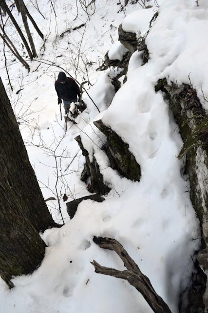 Bobcat tracks on rock ledges