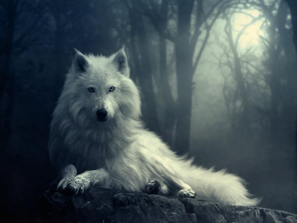 http://3.bp.blogspot.com/-EmOWY6a3tOo/T1VAe2UHQPI/AAAAAAAAAeY/Nkg0o1iIbBY/s1600/Wolf-yorkshire_.jpg