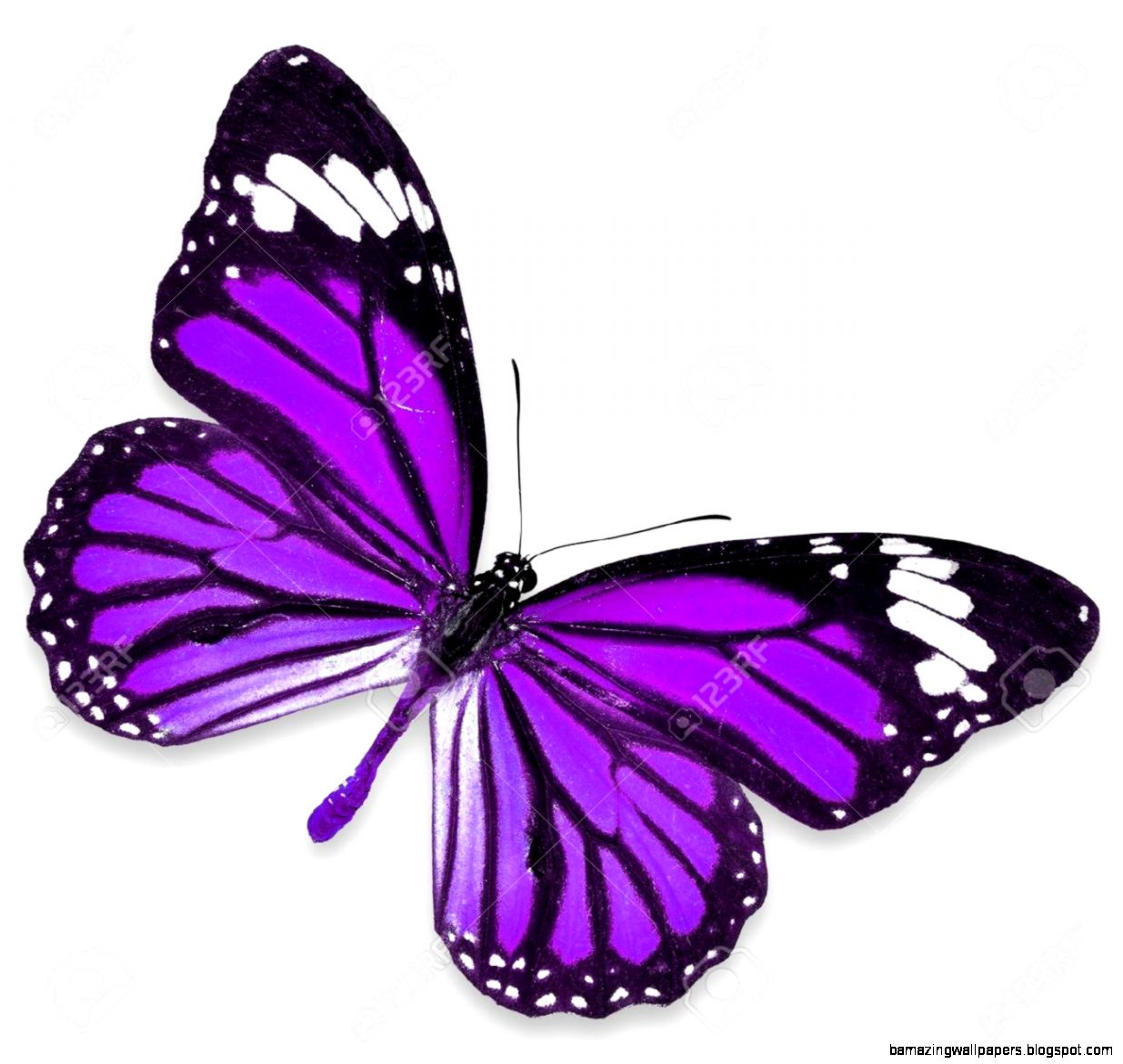 Purple Butterfly Stock Photos Images Royalty Free Purple