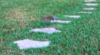 Amazing Trained Hopping Squirrel