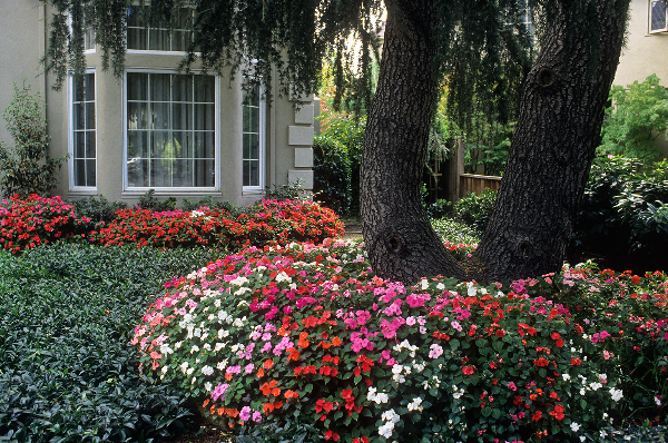 In en om die huis impatiens vir skadu kolle in die tuin - Idee van allee tuin ...