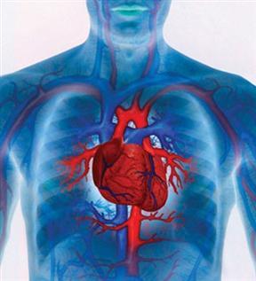 Vascularización periférica del Corazón