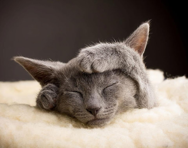 Cute little kitten sleeping on rug image