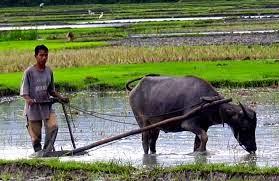 Artikel Pertanian Organik Terlengkap