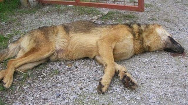 Αδιανόητο! Μαζική δολοφονία στην Ρόδο. Πάνω από 50 ζωάκια νεκρά από φόλες