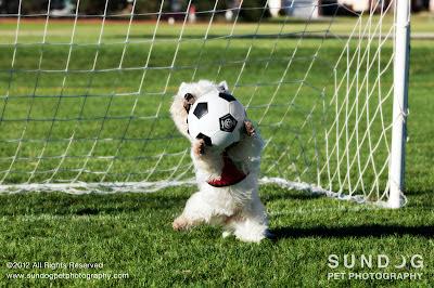 Goalie Dog - Sundog Pet Photography