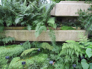 Palms and ferns in landscape design. Kew Gardens. Photo: Oliver Borrow, London.