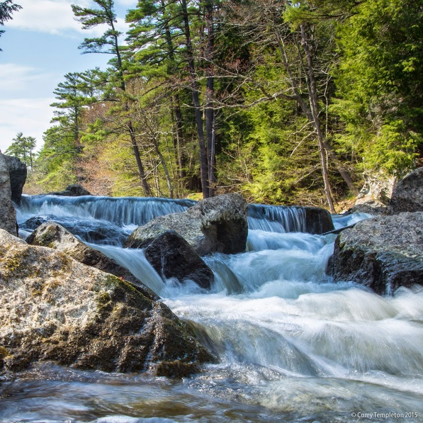 Portland, Maine May 10, 2015 Presumpscot River Preserve photo by Corey Templeton.