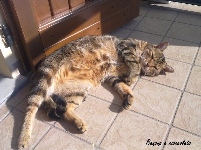gatto Prissi