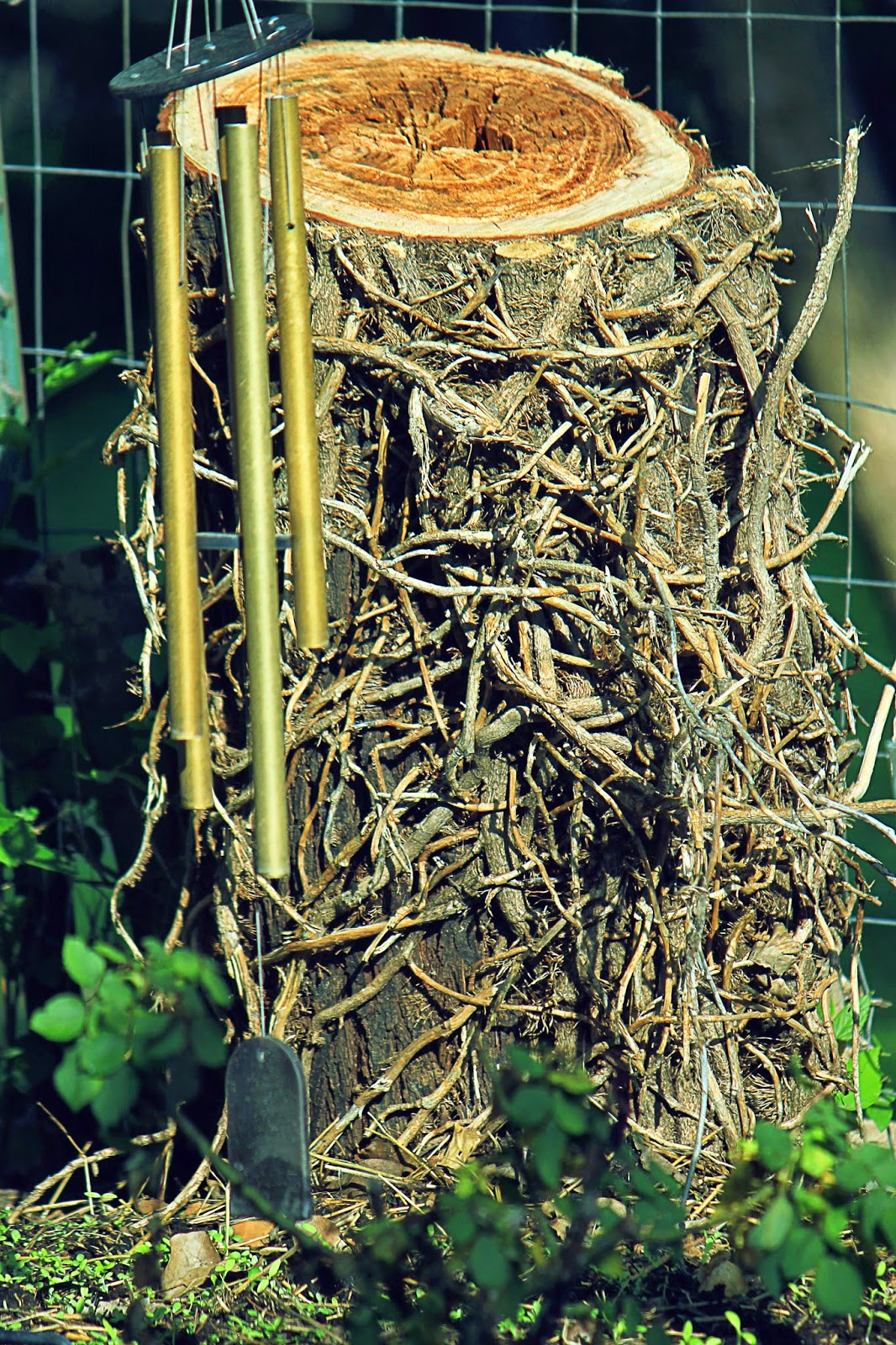 tree stump entanglement