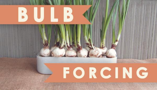 Bulb Forcing