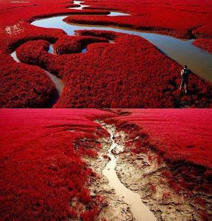 Horizonte rojo