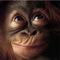 короткие загадки про обезьяну с ответами