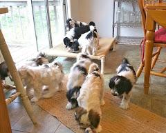 We Have Puppies!