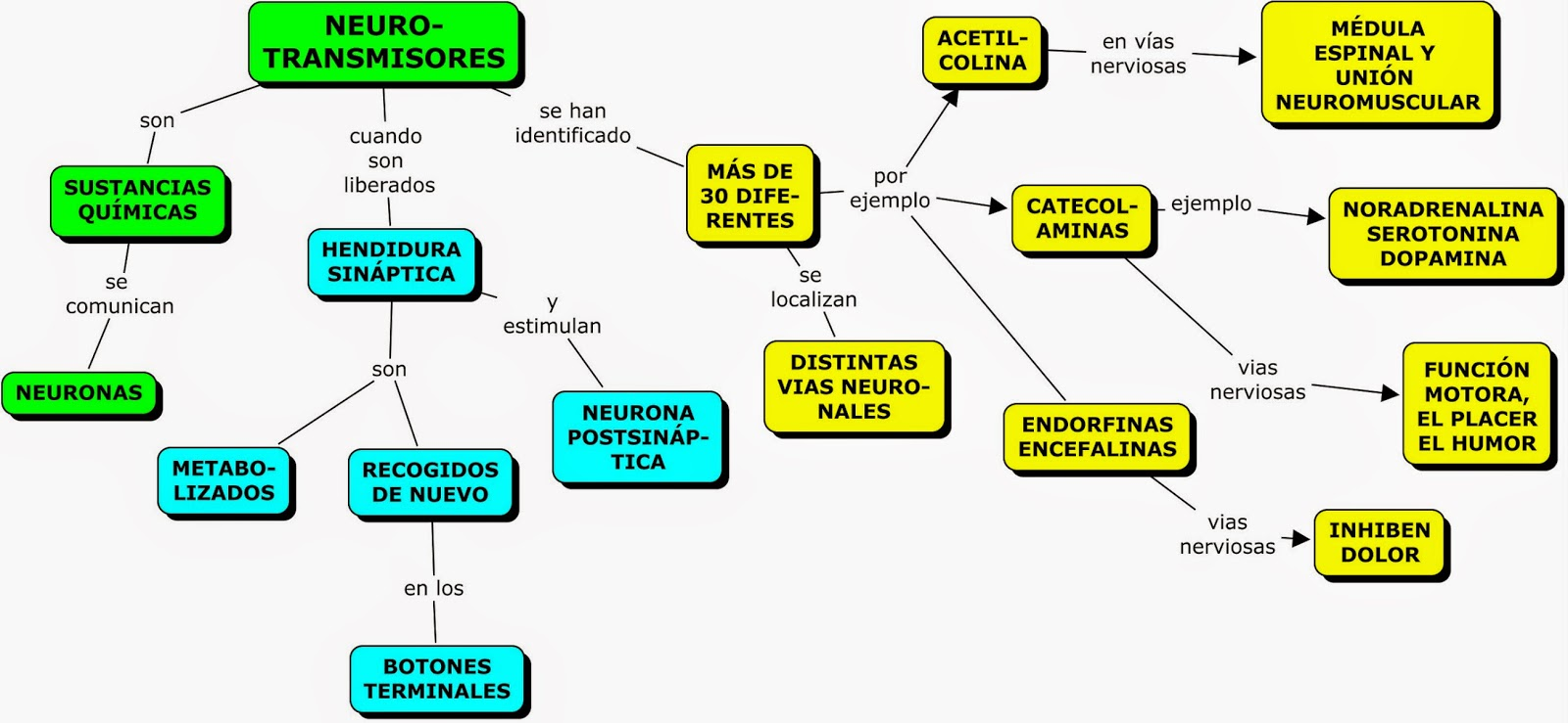 MAPA CONCEPTUAL DEL SISTEMA NERVIOSO CENTRAL | MAPAS CONCEPTUALES ...