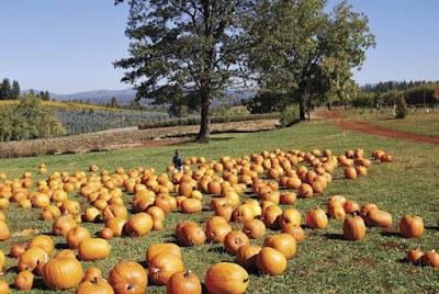 eventbrite Apple Hill pumpkin patch