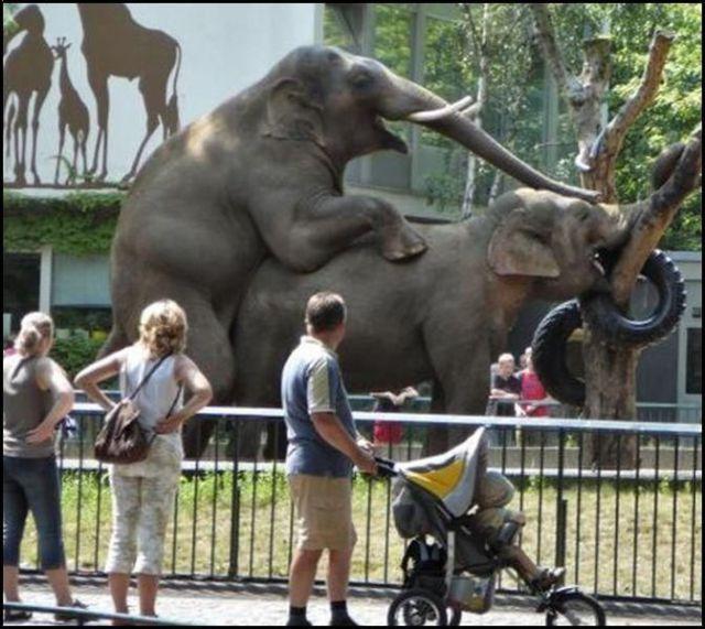 Um elefante em cima do outro no zoológico