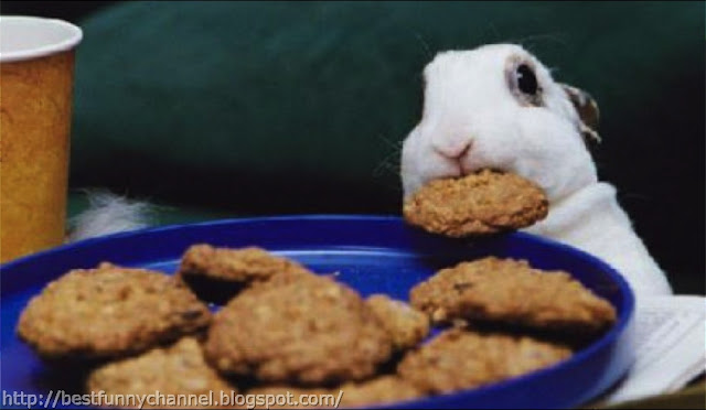 Bunny and cookies.