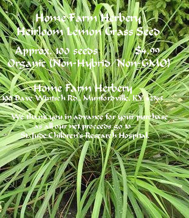 Lemon grass seeds non hybrid non gmo home farm herbery for How do you plant lemon seeds