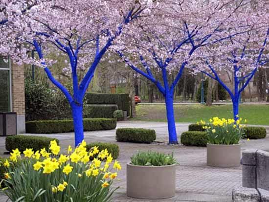 Muebles para patio jardin en color azul patios y jardines for Jardin 7 colores bernal