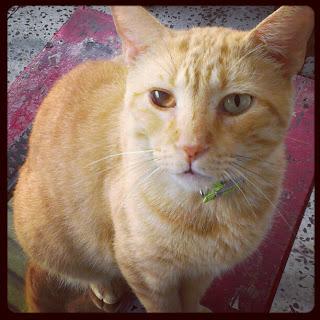 Hipunan Gambar Kucing Comel Malam Ini - Peminat Kucing