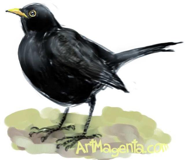Koltrast är en fågel sketch av Artmagenta