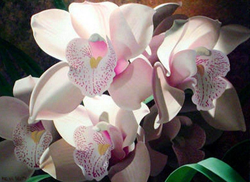 Im genes arte pinturas cuadros bodegones con flores - Cuadros con fotos ...