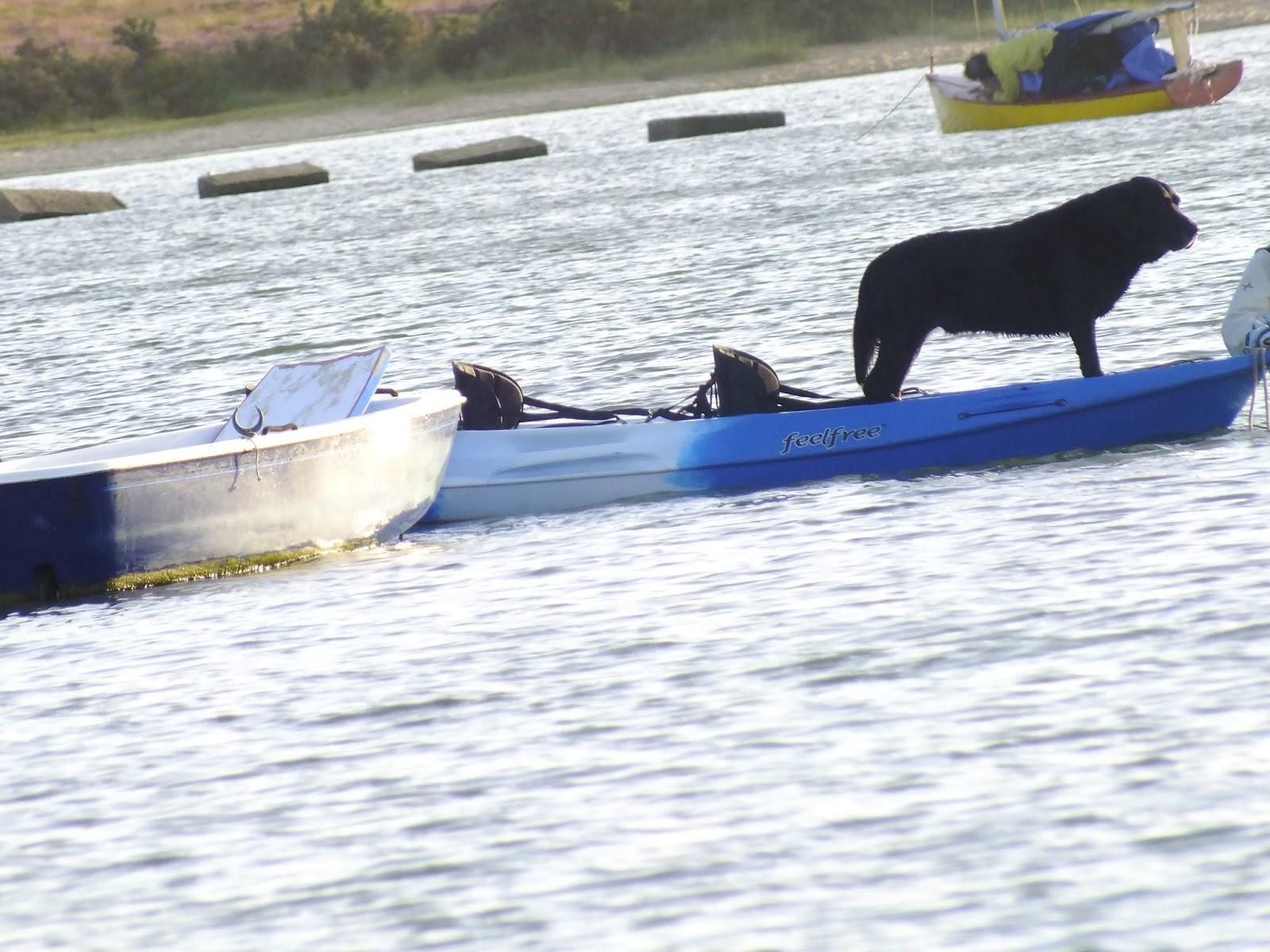 pies na łódce wodzie