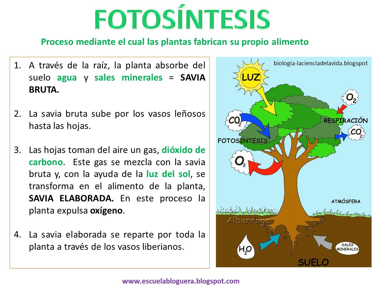 La Fotosntesis - m 66