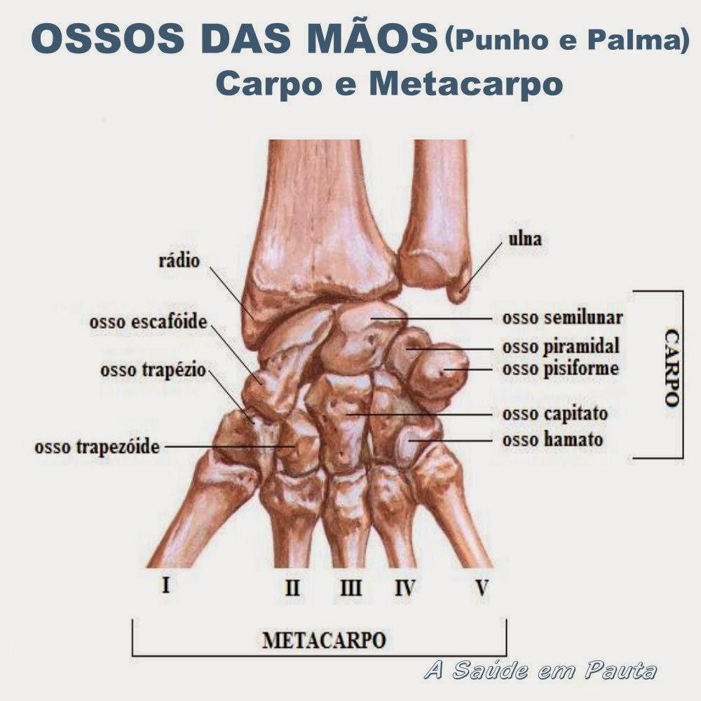 Nomes e localização dos ossos dos punhos e das palmas das mãos (carpo e metacarpo)