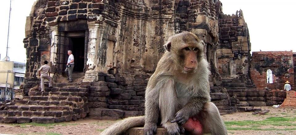 Que faire et voir à Lopburi - singe posé