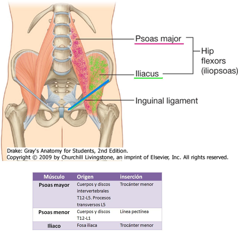 Anatomía UNAM: abril 2011