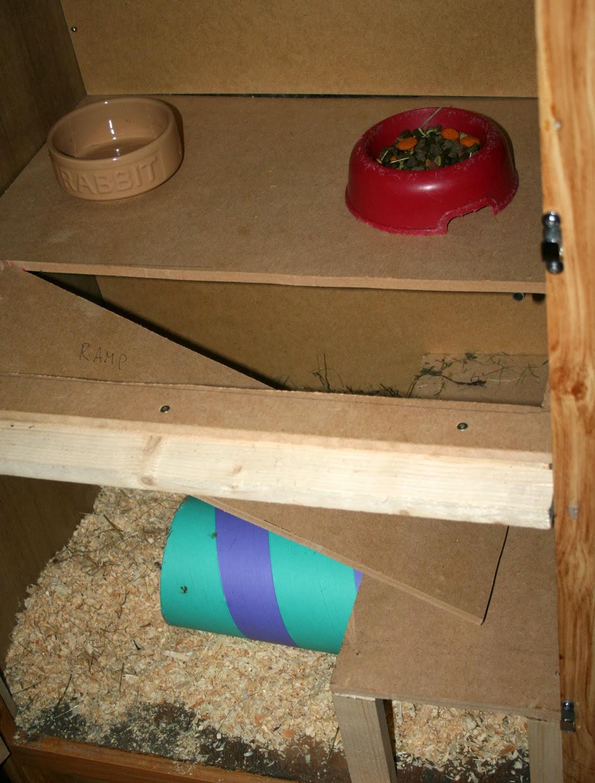 Sassy's cage, prepared