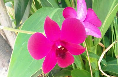 פרח הסחלב