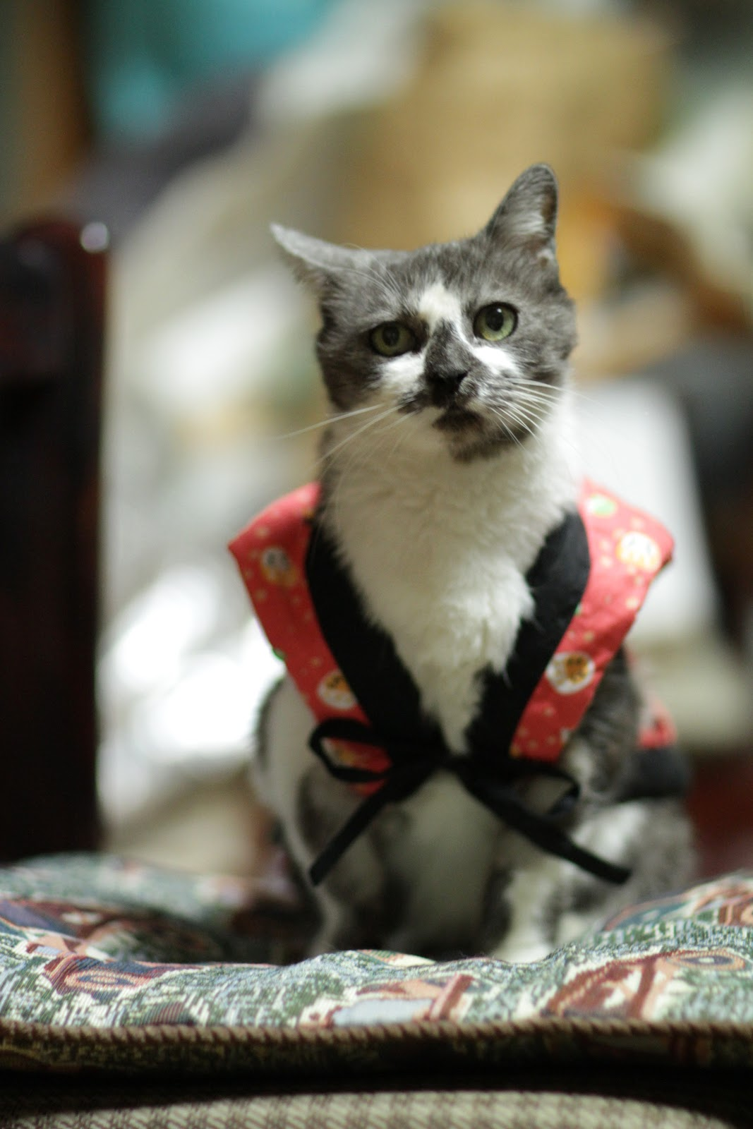 Miyako wearing chanchanko by Takashi from flickr (CC-SA)