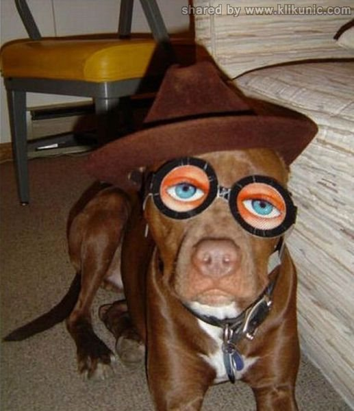 http://3.bp.blogspot.com/-ErZYVDFkhcc/TXXbp8L8X2I/AAAAAAAAQbQ/9YX95X0AyWw/s1600/these_funny_animals_632_640_28.jpg