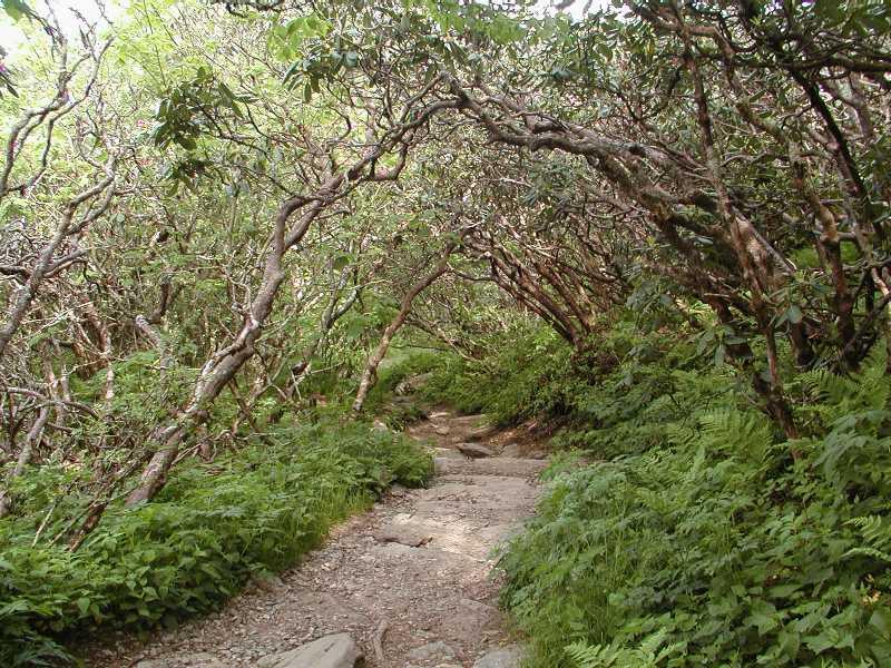 Hike To Craggy Pinnacle Near Black Mountain