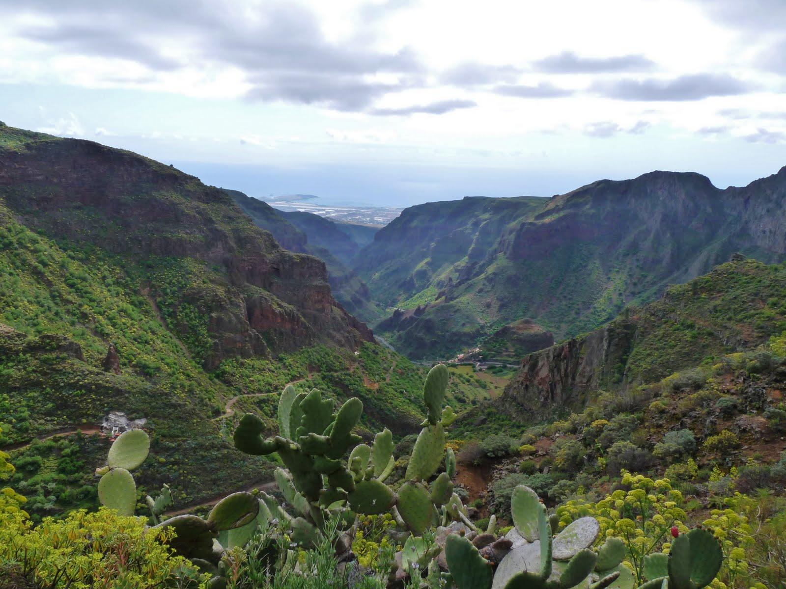 Barranco de Guayadeque - JungleKey.es Imagen