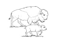 Bison Pictures To Color